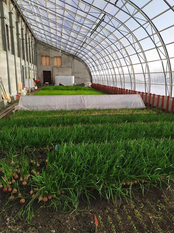 Экогород-сад в Черемшанке